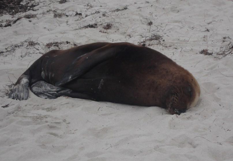 Seal soaking up the sun