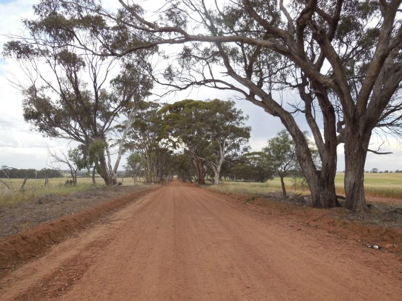Boshack driveway