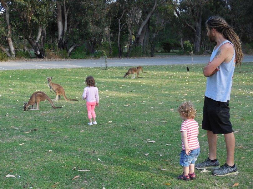 Geocaching Kangaroos