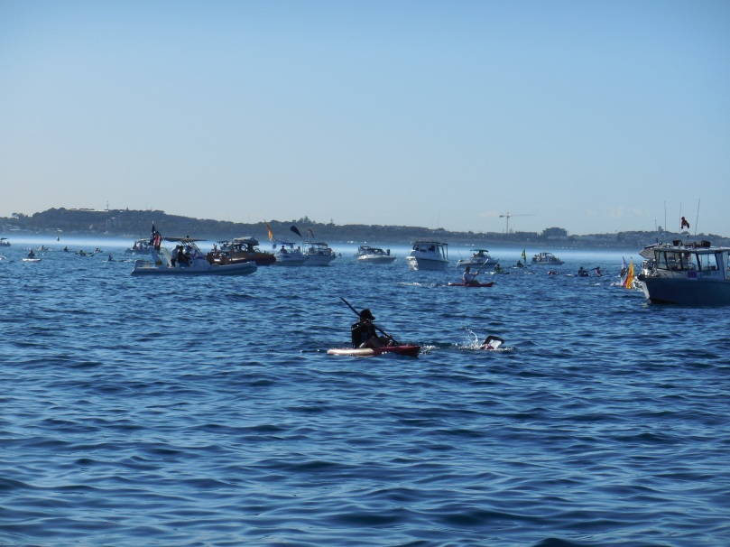 Swim to Rotto 2016
