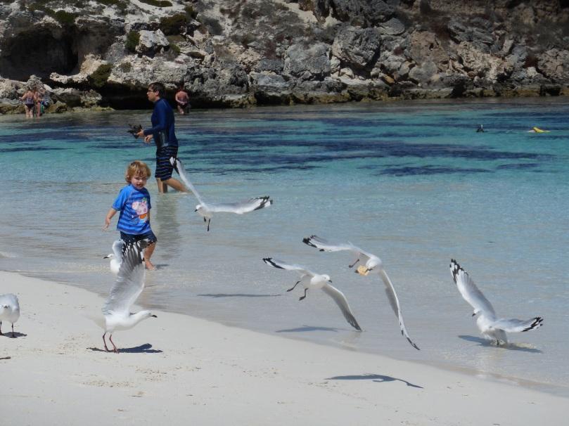 Chasing Seagulls.JPG
