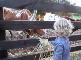 Willow Brook Farm 025