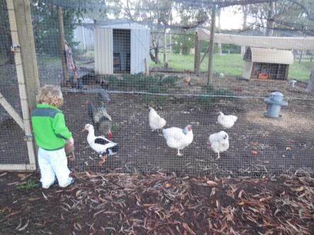 Willow Brook Farm 042