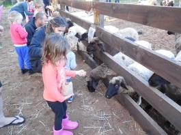 Willow Brook Farm 080