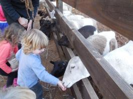 Willow Brook Farm 086