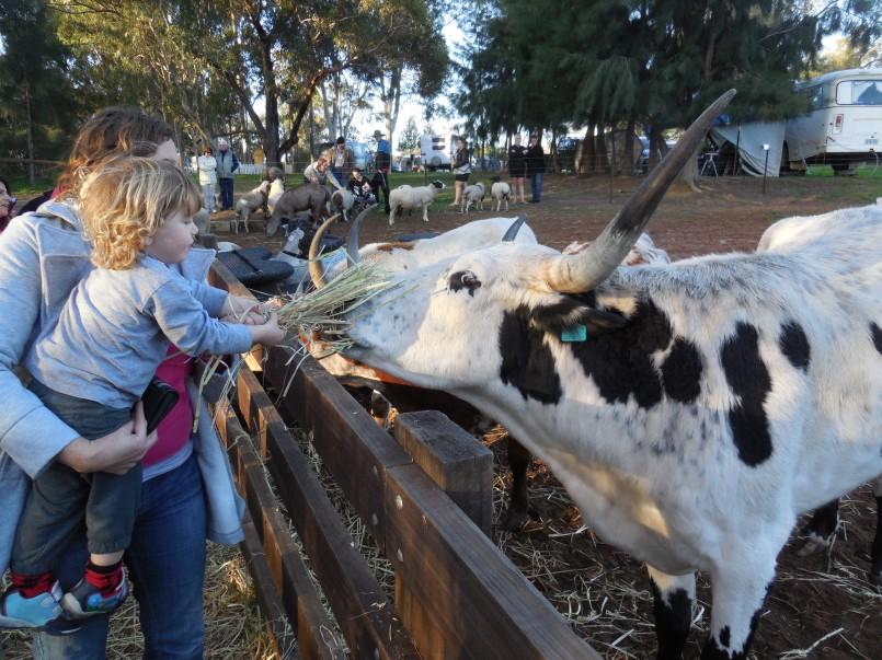 Willow Brook Farm 093