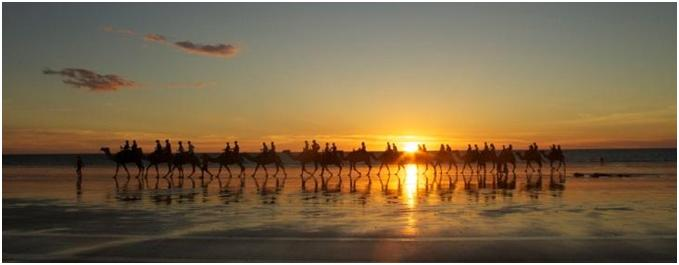 Camels at Broome.jpg