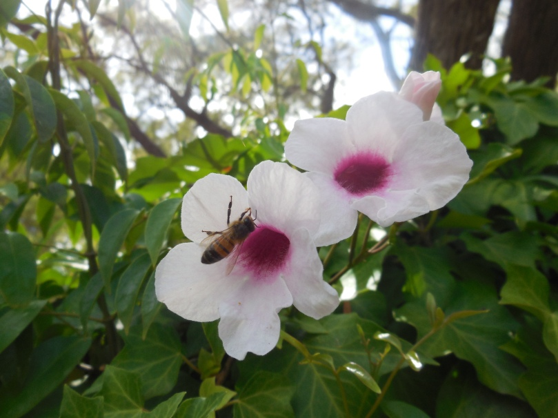 bee-at-boranup-forest-maze
