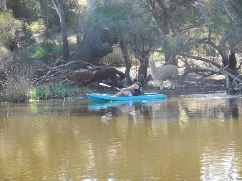 Swan River Alpacas.jpg