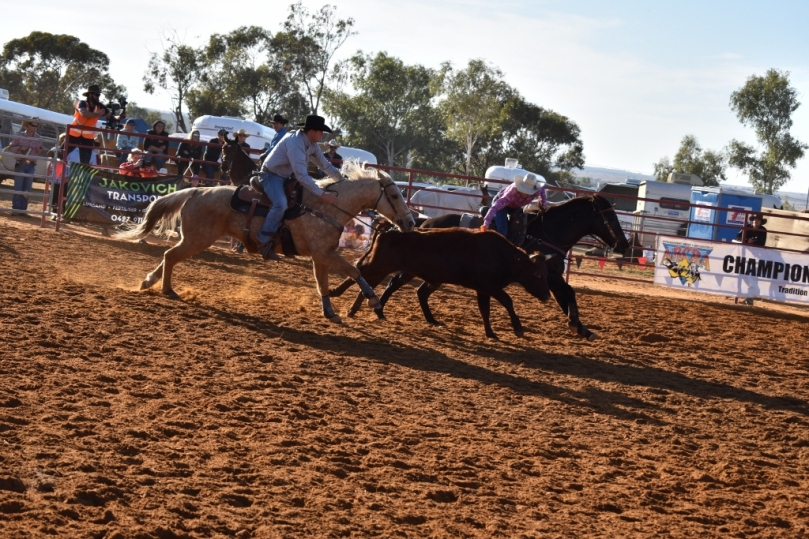 Mullewa Muster Steer Undecorating