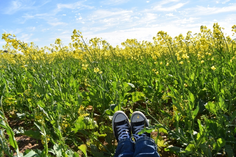 Feet in Canola.jpg