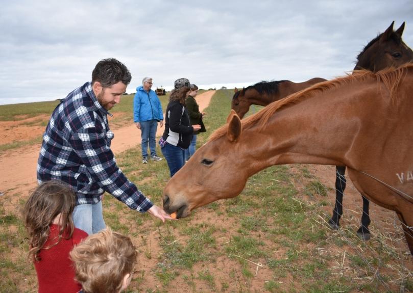 Boshack Outback Horses.jpg