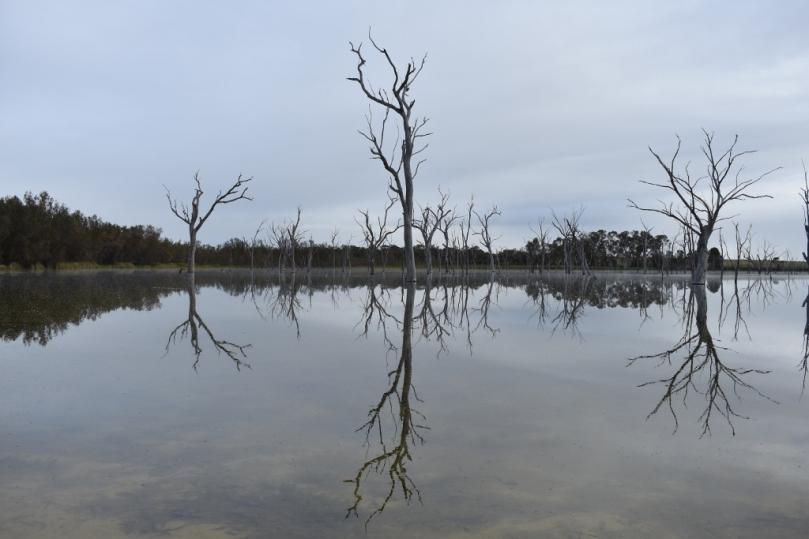 Boshack Outback Lake Serene.jpg
