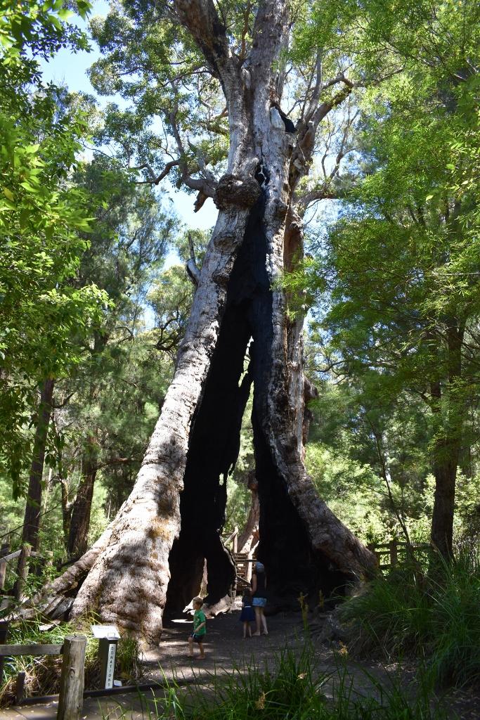 Tingle Tree.jpg