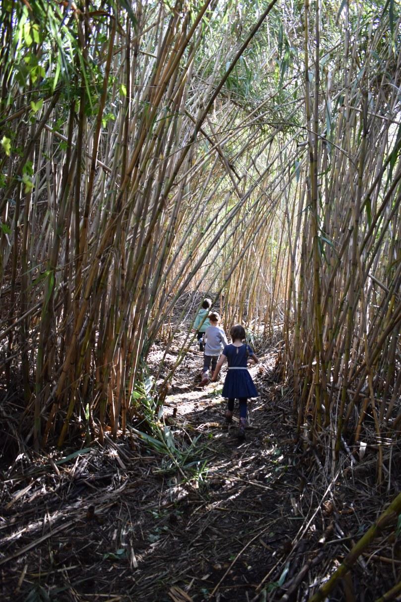 Bamboo Secret Garden