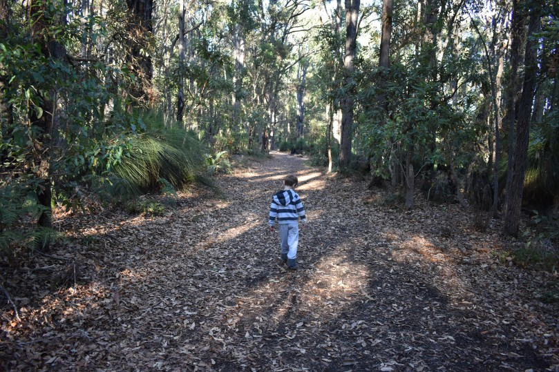 Bush walk Dwellingup