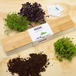urbangreens-microgreens-windowsill-kit