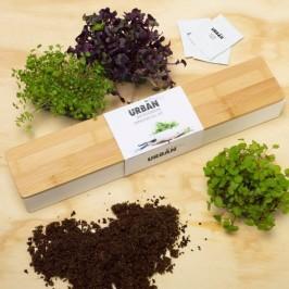 urbangreens-microgreens-windowsill-kit