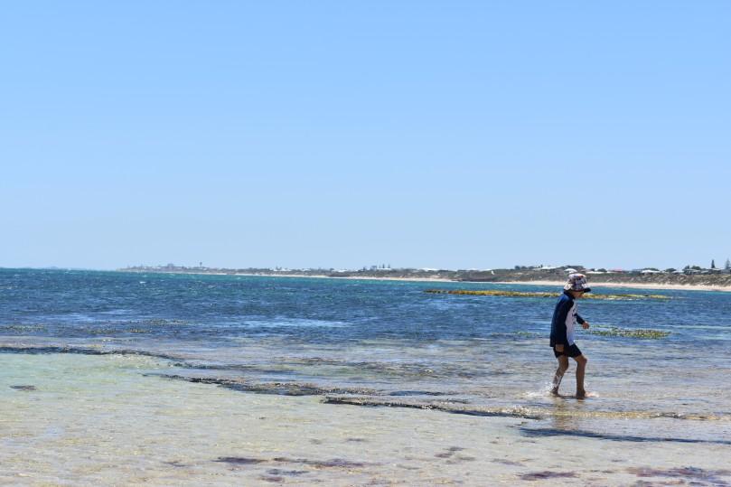 falcon-beach